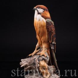 Статуэтка птицы из фарфора Сокол, Capodimonte, Италия, 1985 г.