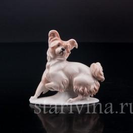 Фарфоровая статуэтка собаки Болонка, миниатюра, Rosenthal, Германия, 1919-22 гг.